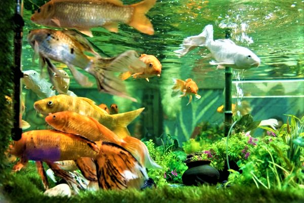 Under The Sun Aquarium Udaipur – India's Largest Fish Aquarium in Udaipur