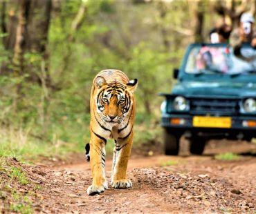 Kumbhalgarh Wildlife Sanctuary – Jungle Safari in Kumbhalgarh