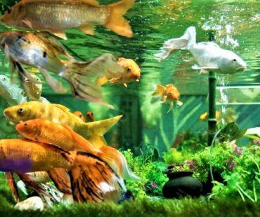 Under The Sun Aquarium Udaipur – India's Largest Fish Aquarium in Udaipur